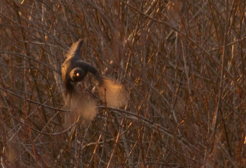 Uccello in volo - foto grande